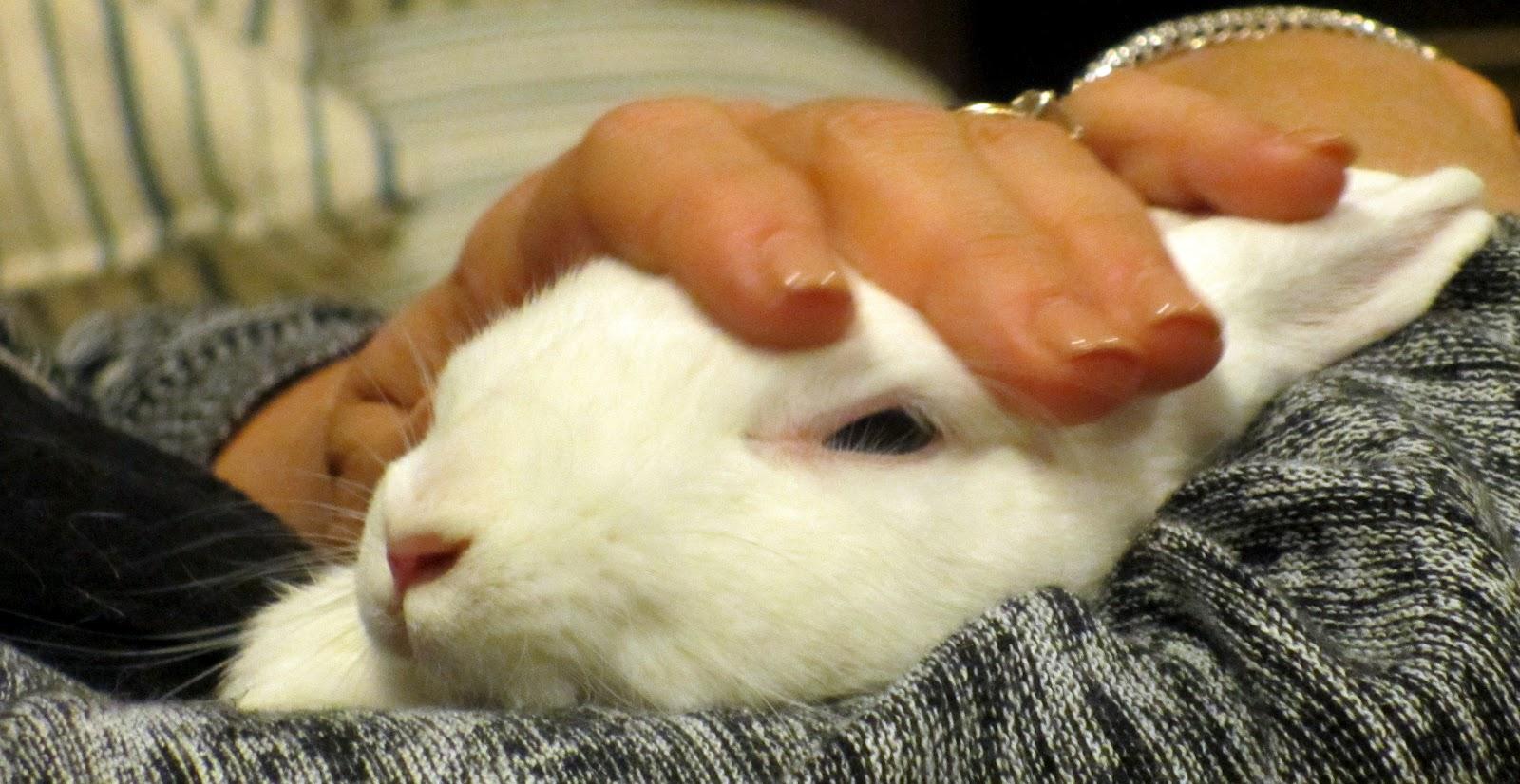 Rabbit Ramblings  Ethel Snuggle Bunny 0c55568d2