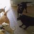 Σκηνικό Νταχάου στο καταφύγιο αδέσποτων σκύλων του δήμου Αθηναίων -Ζώα παρατημένα στην τύχη τους [σοκαριστικές εικόνες]
