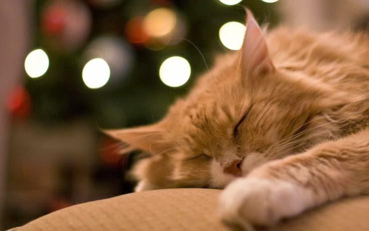 Домашние животные кошки, Влияние кошек на человека, Поведение домашних животных, Влияние животных на здоровье человека