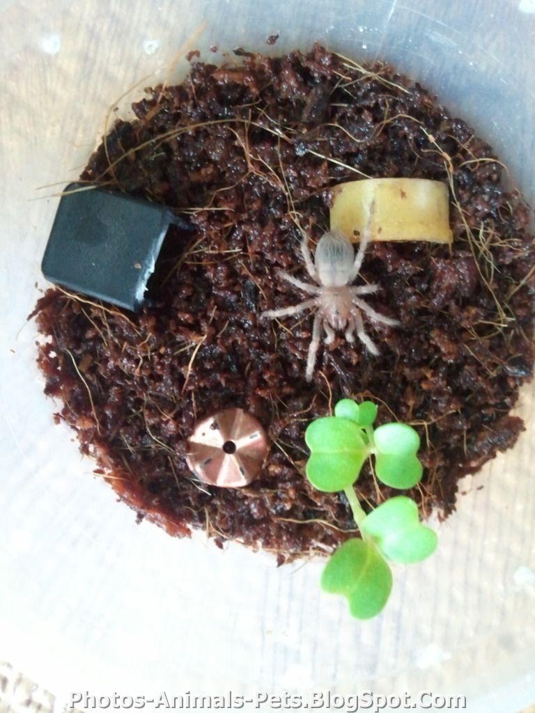 http://2.bp.blogspot.com/-g1EjWP-k-vE/TxRWqsvdQvI/AAAAAAAAC1g/H2X1nCICDn0/s1600/spiders.jpg