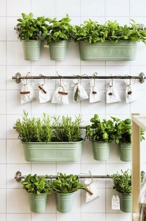 Kruidenplantjes binnen