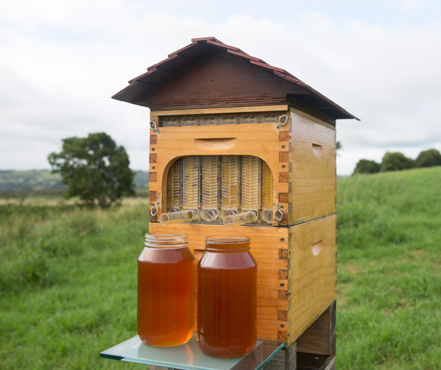 Flow Hive: Beehive Honey Tap