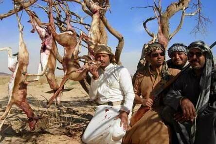الثروة الحيوانية بالجزائر