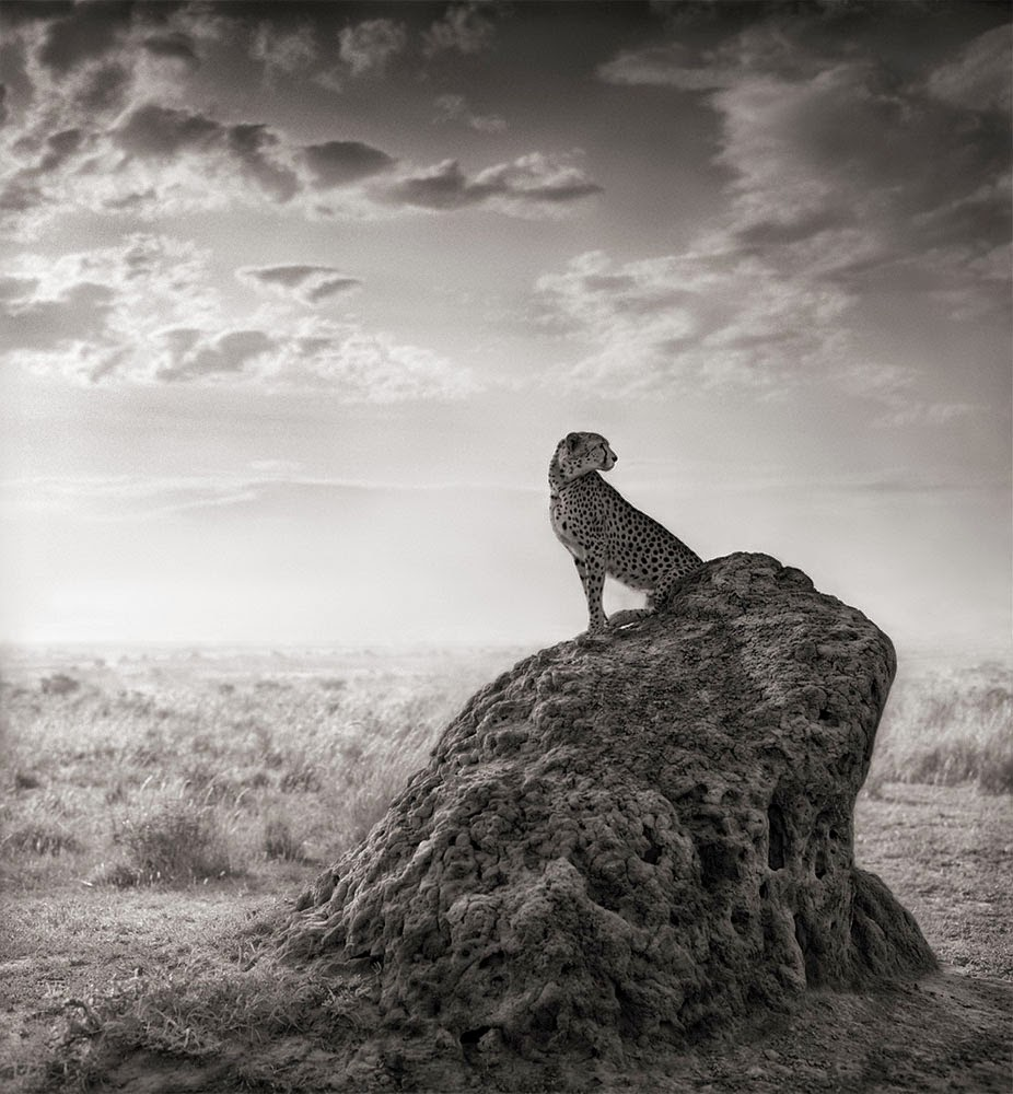 Nick Brandt, A shadow falls