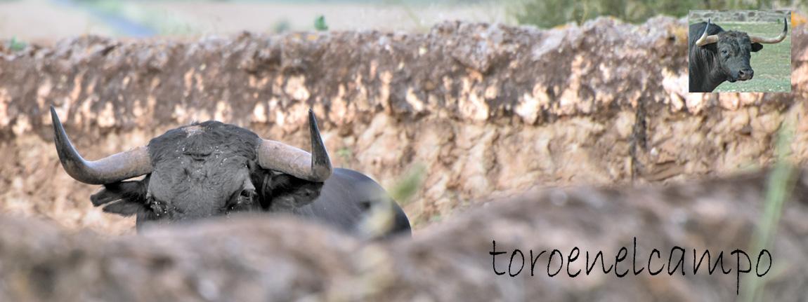 Toroenelcampo