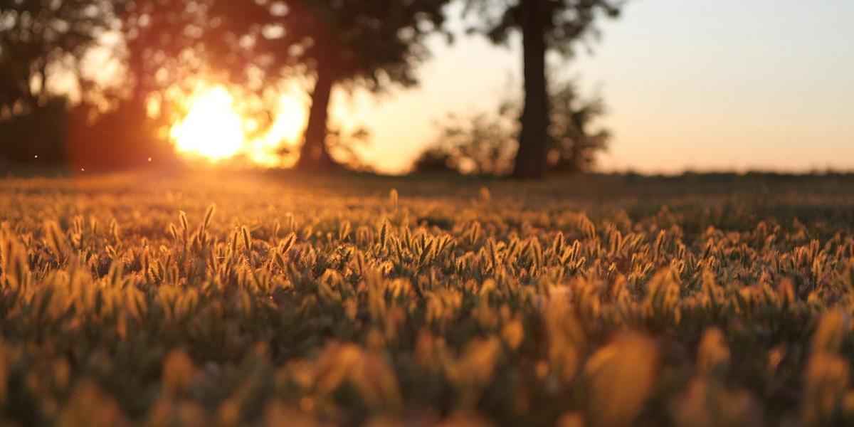 Sunset Trees l 300+ Muhteşem HD Twitter Kapak Fotoğrafları