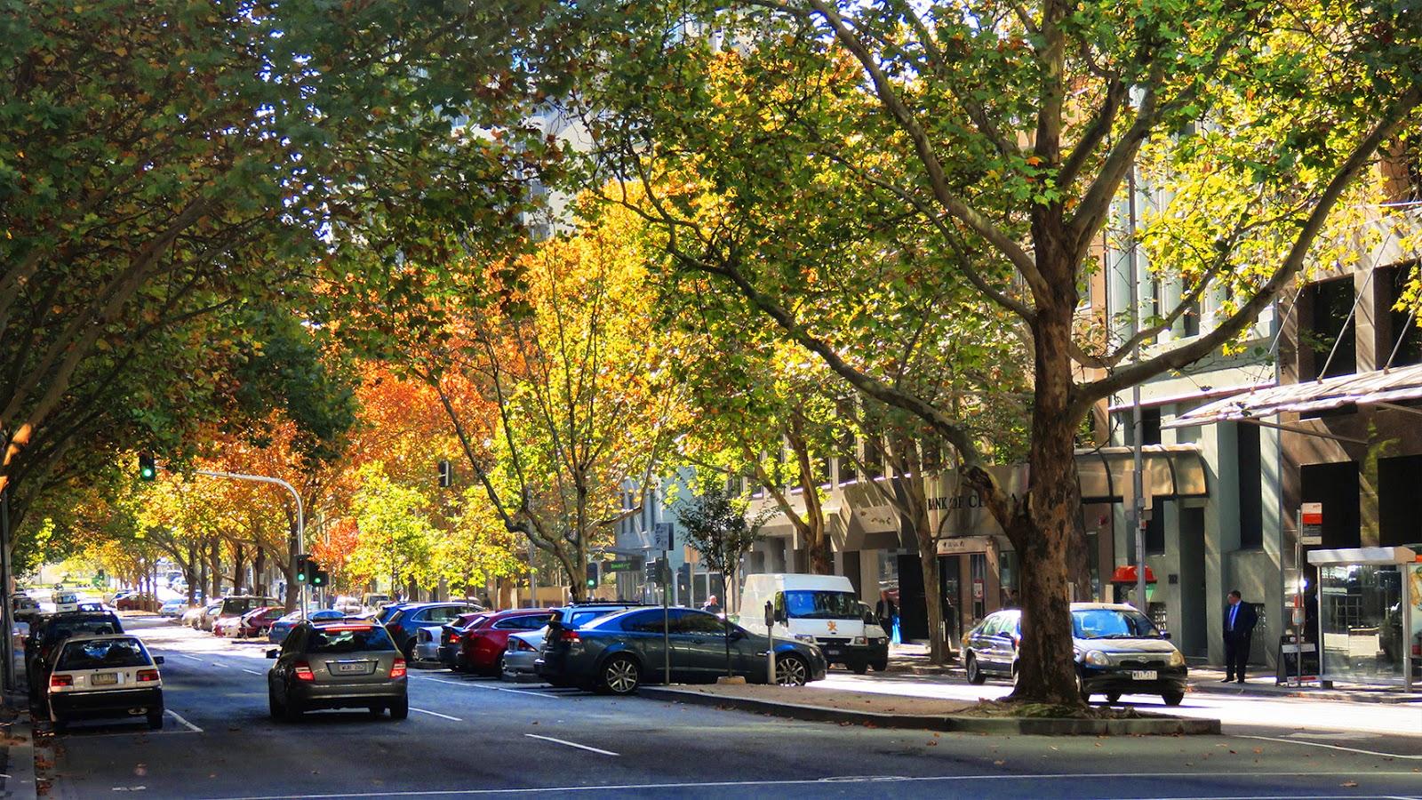 melbourne autumn street