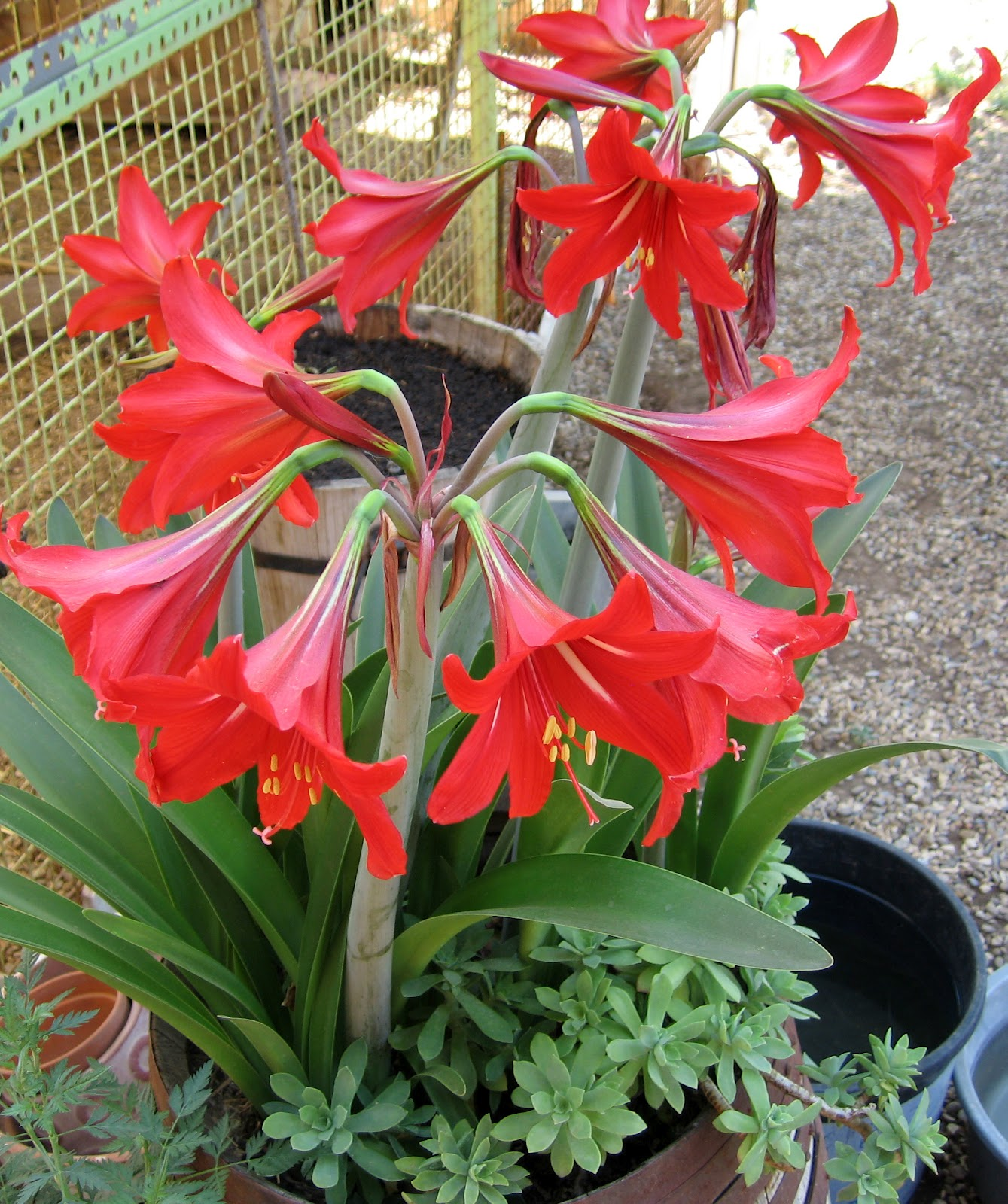 Fotos De Flores De Todo Tipo - Nombres de flores con fotos Plantas facilisimo com