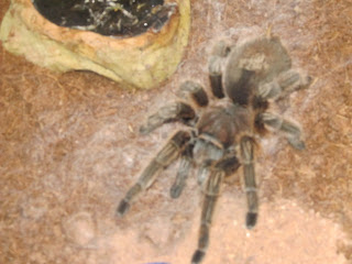 Tarantula Awareness Festival – 10/27/12