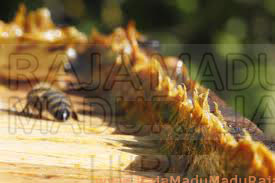 As Bees residence and Anticancer Antibiotics