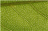 Close up detail of a leaf