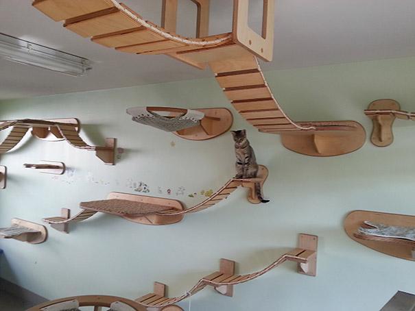Como deixar sua casa mais confortavel e divertida para seus gatos: Pontes para gatos