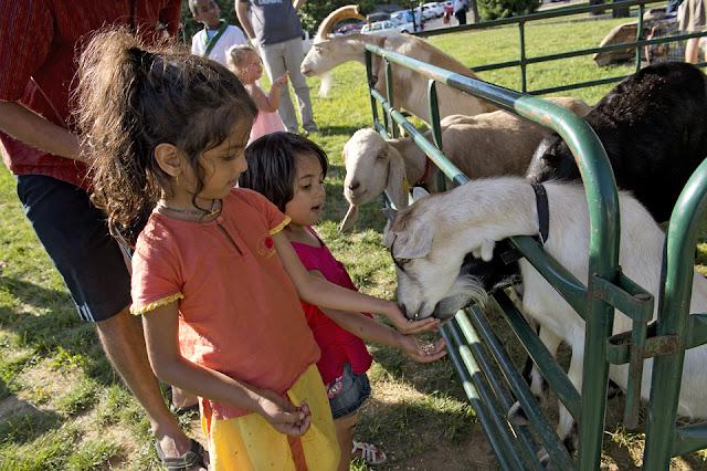 Goats, Children, Petting Zoo, Kids