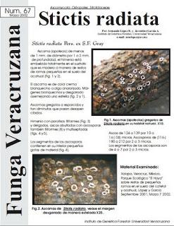 Stictis radiata (Ascomycota)