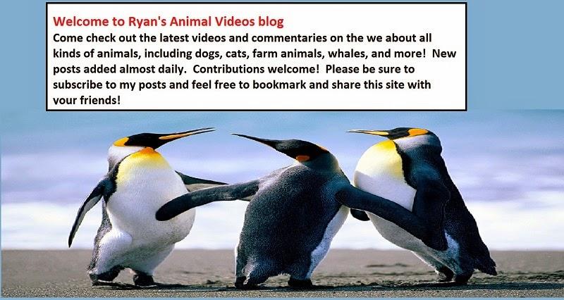Ryan' Jones' Animal Videos Blog - sharing interesting videos about animals