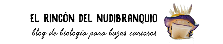 El rincón del nudibranquio.