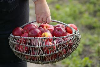 apple, Sônia Hirsch, alimentação, alimentação saudável, saúde, maça, benefícios da maça, fígado, água, Vinagre de Maçã, nutrição,