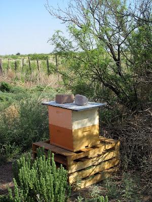 Honey Bee habitat restoration