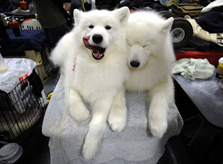 Animal Planet  Westminster Dog Show