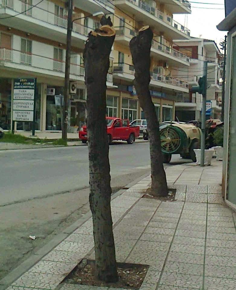 κομμένα δέντρα στην Έδεσσα