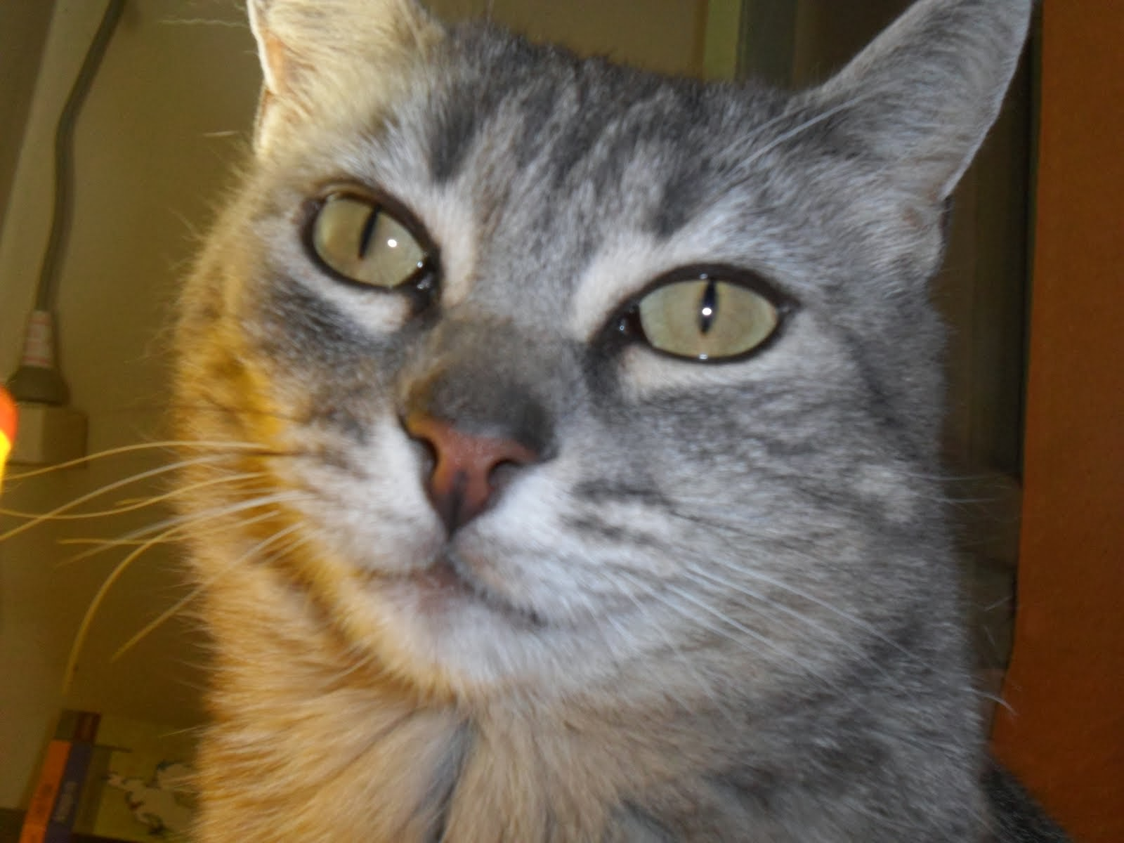 """""""Todo gato es una obra maestra"""" L. Da Vinci -"""