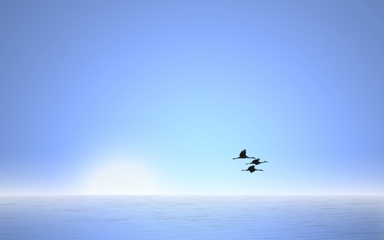 Bird Fly In Blue Sky Wallpaper Nature Wallpaper