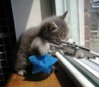 Gambar Kucing Lucu pict