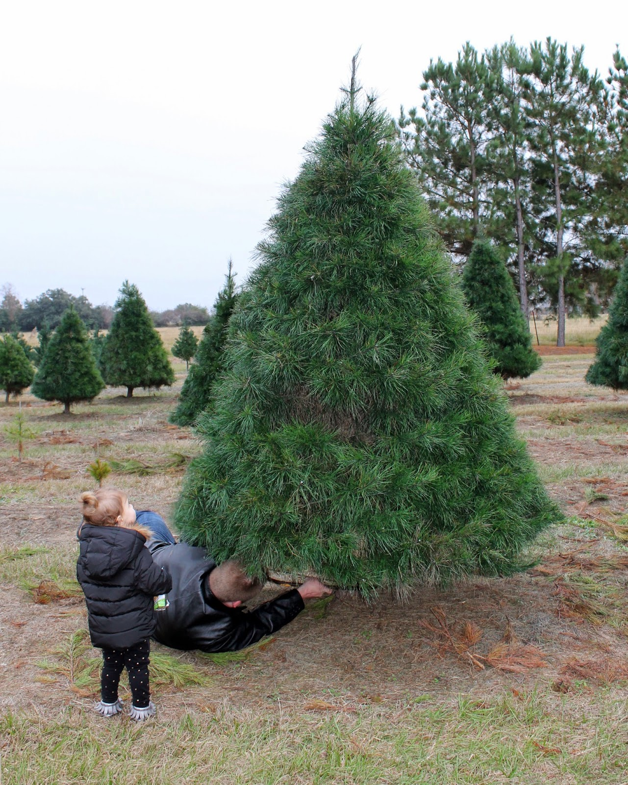 Toddler at Christmas Tree Farm | Bubbles and Gold.
