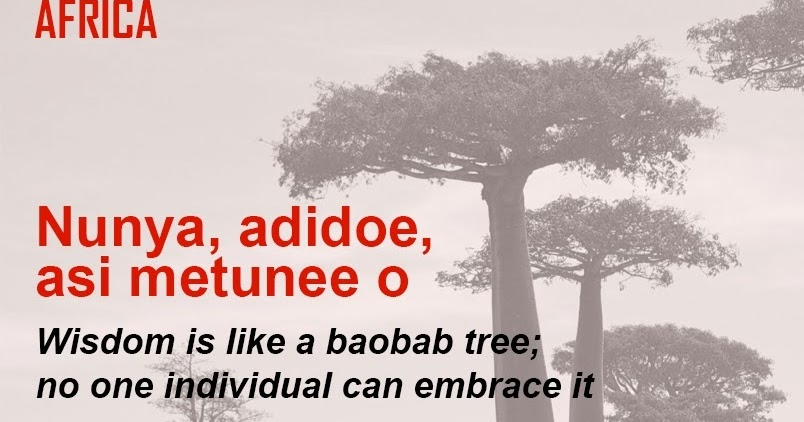 a description of wisdom as a baobab tree The baobab is a very unique species of tree known by the scientific name adansonia digitata it is also commonly known as the tree of life since so many animals can.