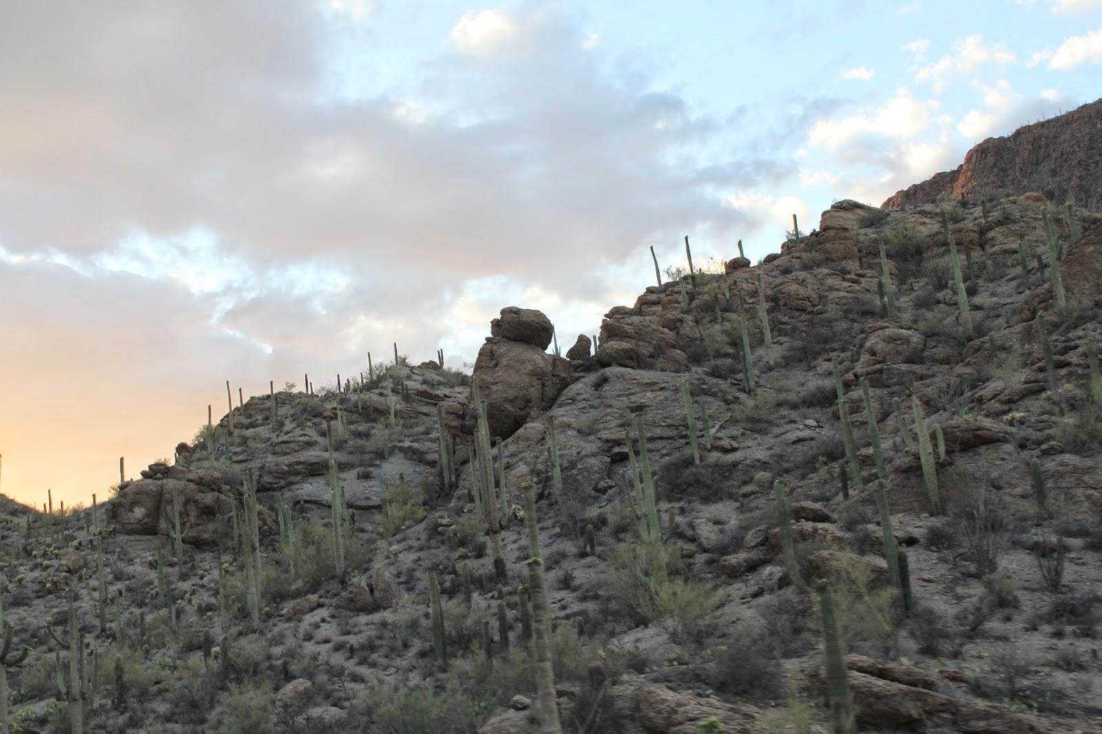 кактусы-в-пустыне-Аризона