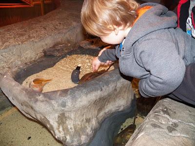 Aquarium Picture 4