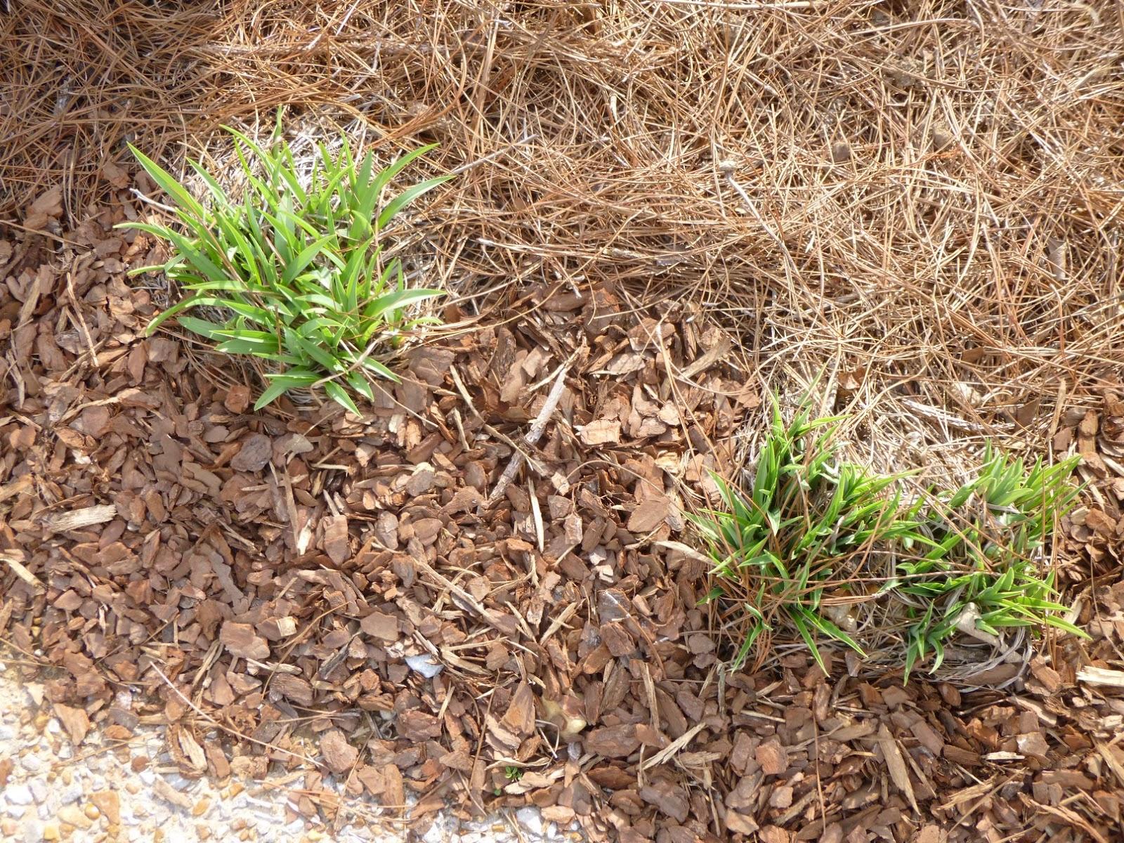 Garden of Aaron: Eating My Words on Pine Straw