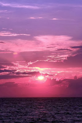 Purple sunset radiant orchid