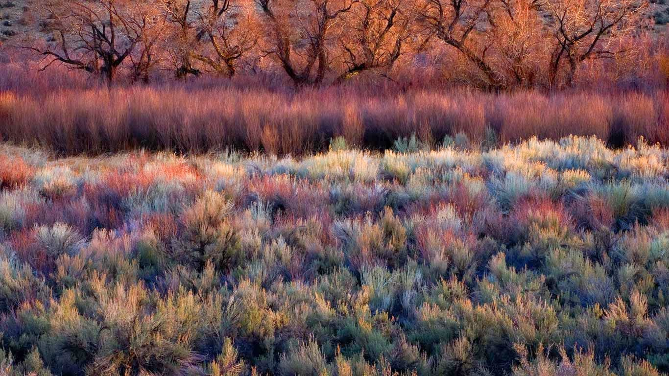 Foliage, including cottonwoods, willows, sage, and rabbitbrush in California's Owens Valley (© Marc Adamus/Aurora Photos) 421