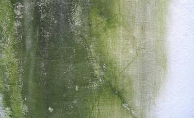 Tips Mengecat Ulang Dinding Berjamur & Lembab