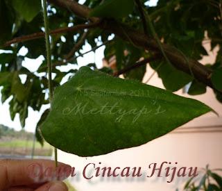 Single pertama hijau daun