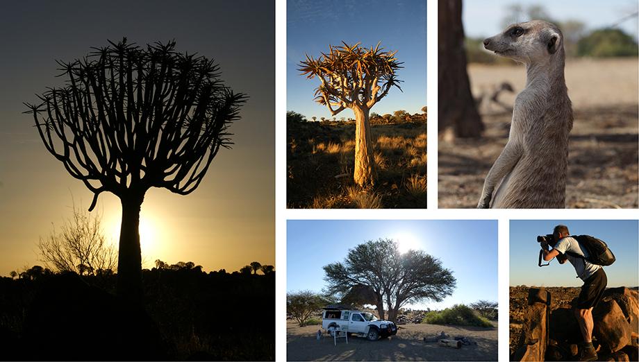 Ynas Reise Blog | Namibia | Erdmännchen und Köcherbäumer in Ketmannshoop