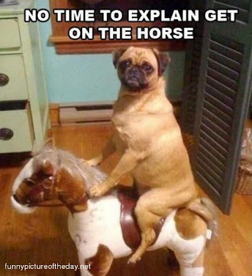 No Time To Explain Funny Dog On Horse