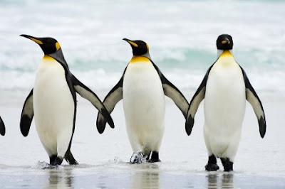 Belajar Kehidupan Dari Penguin
