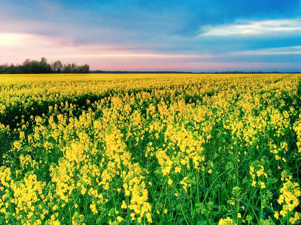 jardim rosas amarelas : jardim rosas amarelas:Arquitetando Na Net: UM BELO TEXTO DE ROBERTO SHINYASHIKI PARA INICIAR