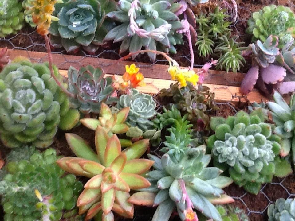 PLANTAS, FLORES Y VELAS ....Para decorar, para disfrutar !!: UN ...