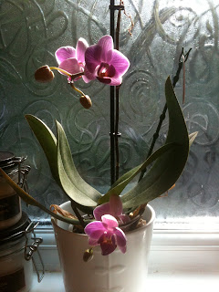 beautiful orchid on the bathroom windowsill