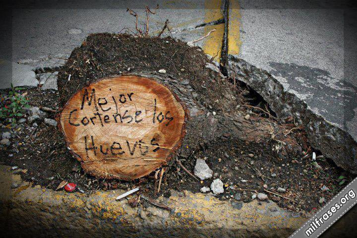 naturaleza destruida, Mejor córtense los huevos escrito en un árbol