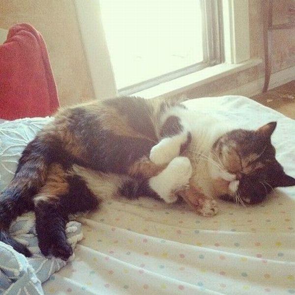 Фото котов: обнял свою заднюю лапу