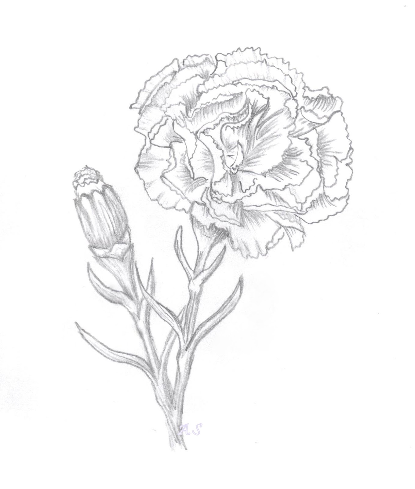 Flower sketches Sketches and Flower on Pinterest
