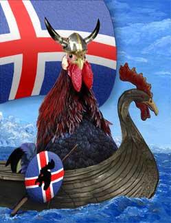 Icelandic Chickens aka Islanski Hænur or Íslenska landnámshænan