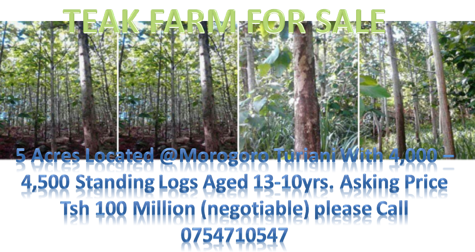 teak farm for sale