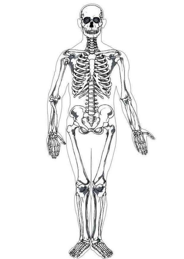 Growing Memories And Minds May 2010 Human Skeleton Coloring Pages