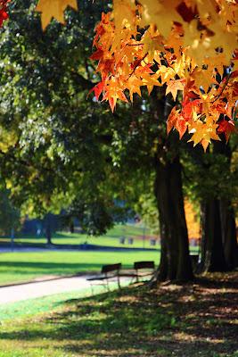 Le foglie autunnali nel Parco della Pellerina di Torino.