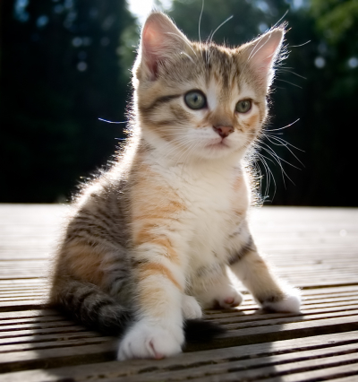 The Best Cute Kitten Pictures